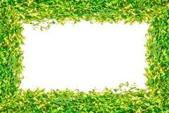 背景的绿草被隔绝的框架 库存图片