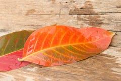 背景秋天在木头的桔子叶子 免版税库存照片
