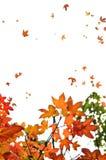 背景秋天留下槭树 库存照片