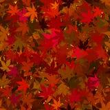 背景秋天留给槭树无缝 免版税库存图片