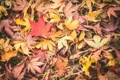 背景秋天,室外 图库摄影