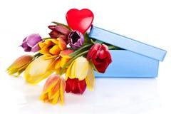 背景空白查出的郁金香 颜色花礼物 库存图片
