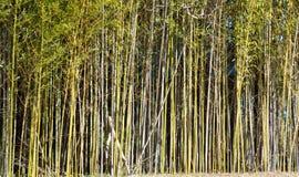 背景竹子关闭自然结构树 免版税库存照片