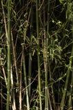 背景竹子关闭自然结构树 免版税库存图片