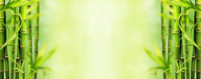 背景竹子密林 免版税库存图片