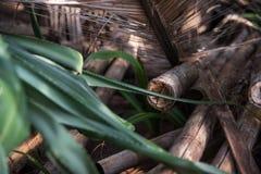 背景竹子是干燥的象可能使用 图库摄影