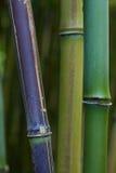 背景竹详细资料绿色停留热带 库存图片