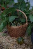 背景篮子用少量南瓜,橡木离开,莓果 秋天栗子装饰葡萄10月石榴木头 有机收获和假日标志 免版税图库摄影
