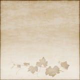 背景米黄图画葡萄树 库存图片