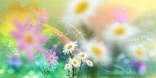 背景精采色的花卉弹簧 免版税库存图片