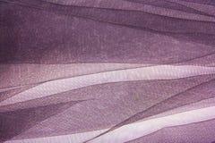 背景紫罗兰 免版税库存照片