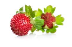 背景红色无缝的草莓白色 图库摄影