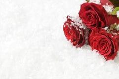 背景红色玫瑰雪三 库存图片