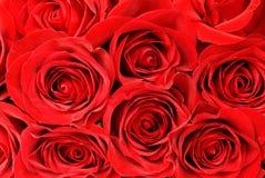 背景红色玫瑰 免版税图库摄影