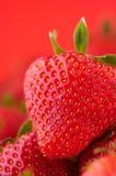 背景红色草莓 免版税图库摄影