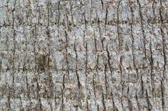 背景纹理关闭棕榈树吠声 免版税库存图片