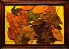 背景纹理概念 在木纹理的秋天五颜六色的叶子在框架 槭树和橡木烘干了在黄色放置的叶子 图库摄影