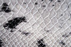 背景纹理仿制Python皮肤 库存图片