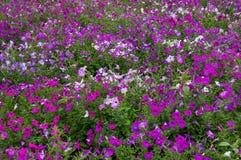 背景细部图花卉向量 与紫色瓣的精美白色 免版税库存图片