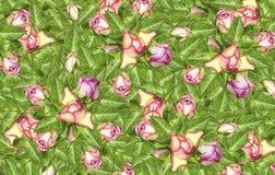 背景细部图花卉向量 桃红色玫瑰花的芽在绿色叶子的 库存照片