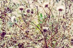 背景细部图花卉向量 背景蓝色云彩调遣草绿色本质天空空白小束 软绵绵地集中 免版税库存图片