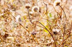 背景细部图花卉向量 背景蓝色云彩调遣草绿色本质天空空白小束 软绵绵地集中 免版税库存照片