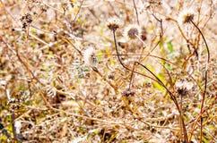 背景细部图花卉向量 背景蓝色云彩调遣草绿色本质天空空白小束 软绵绵地集中 库存图片