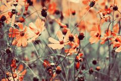 背景细部图花卉向量 库存照片