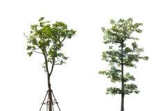 背景结构树二白色 库存图片