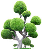 背景结构树白色 免版税库存照片