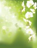 背景绿灯兰花 免版税图库摄影