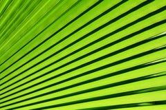 背景绿色叶子掌上型计算机 免版税库存图片