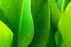 背景绿色叶子 免版税库存图片