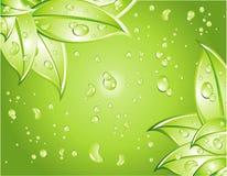 背景绿色叶子 库存例证