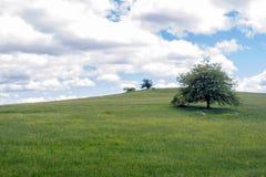背景绿色春天 草和cloudscape艺术设计 夏天environmetal风景概念 库存图片