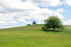 背景绿色春天 草和cloudscape艺术设计 夏天environmetal风景概念 免版税库存照片