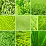 背景绿色本质 免版税库存图片