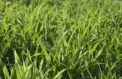 背景绿色植物 免版税库存照片