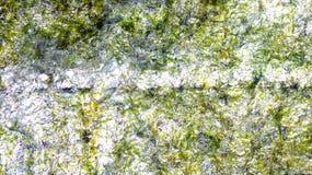 背景绿色海带 免版税库存图片