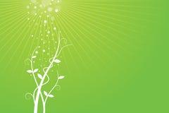 背景绿色生长工厂 免版税库存图片