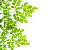 背景绿色留下白色 复制空间 免版税库存照片