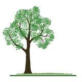 背景绿色结构树 库存例证