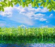 背景绿色自然 春天绿草、水、太阳和天空 免版税图库摄影