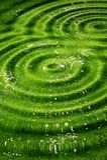 背景绿色起了波纹 图库摄影