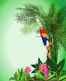 背景绿色鹦鹉 库存照片