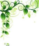 背景绿色 图库摄影