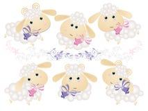 背景羊羔 免版税图库摄影