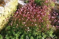 背景美丽的刀片花园 库存照片