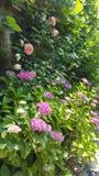 背景美丽的刀片花园 免版税库存照片