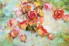 背景美丽的干燥玫瑰葡萄酒 免版税库存照片